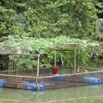 চাঁদপুরের ফরিদগঞ্জ নদীতে ভাসমান সবজি চাষ করে সফল হয়েছেন সহিদ তালুকদার